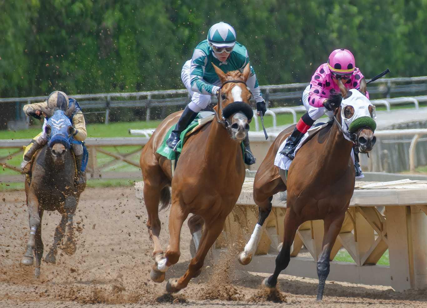 William Hill horse racing